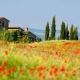 Vakantie in Toscane billen