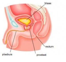 prostaat massage